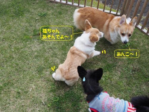 福ちゃんちお庭2