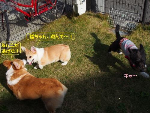 福ちゃんちお庭3