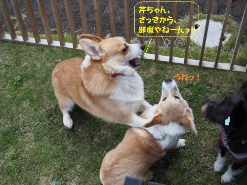 福ちゃんちお庭4