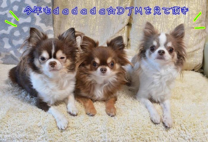 DSC_5171_20151231051842d2f.jpg