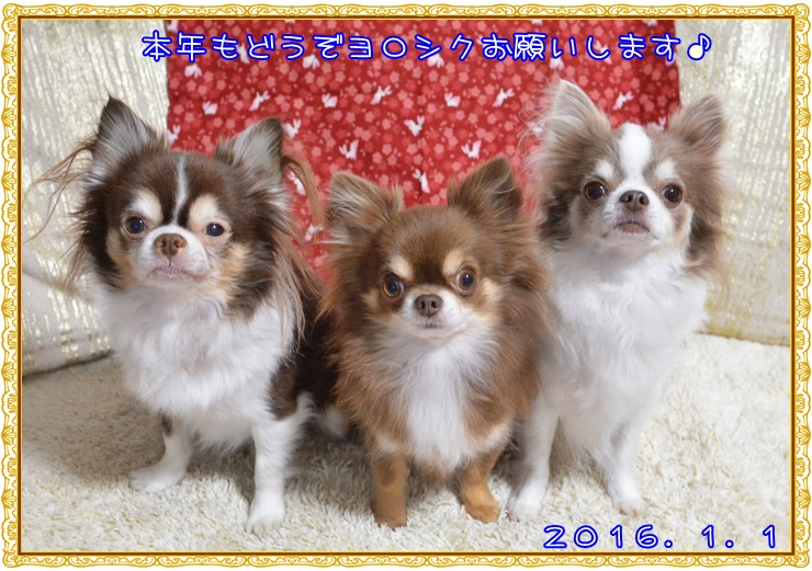 DSC_5186_20151231070947be0.jpg