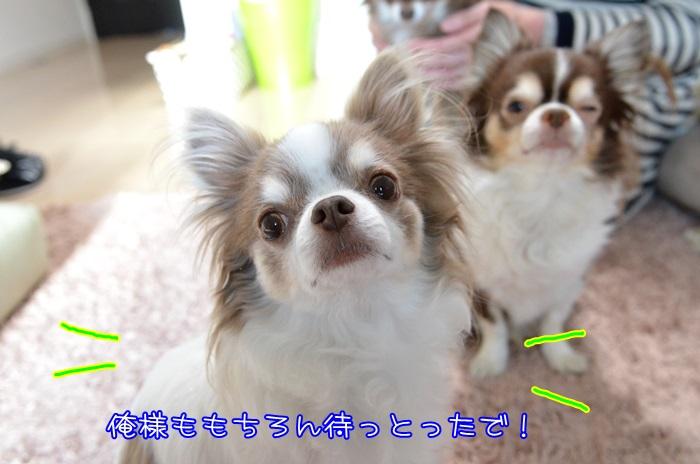 DSC_5277_20160113195057080.jpg
