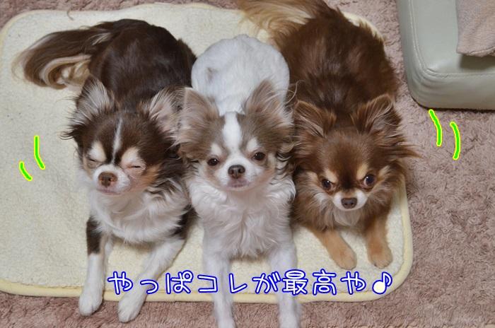 DSC_5370_2016012120301034a.jpg