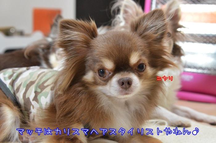 DSC_5379.jpg