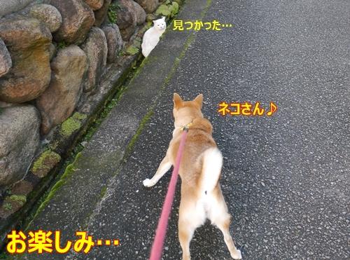 5ネコさん