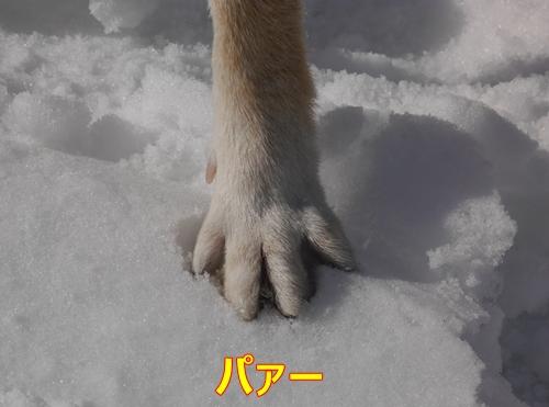 4雪上ではパー