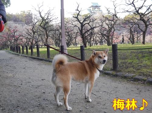3大阪城梅園