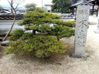 56泰山寺-松26