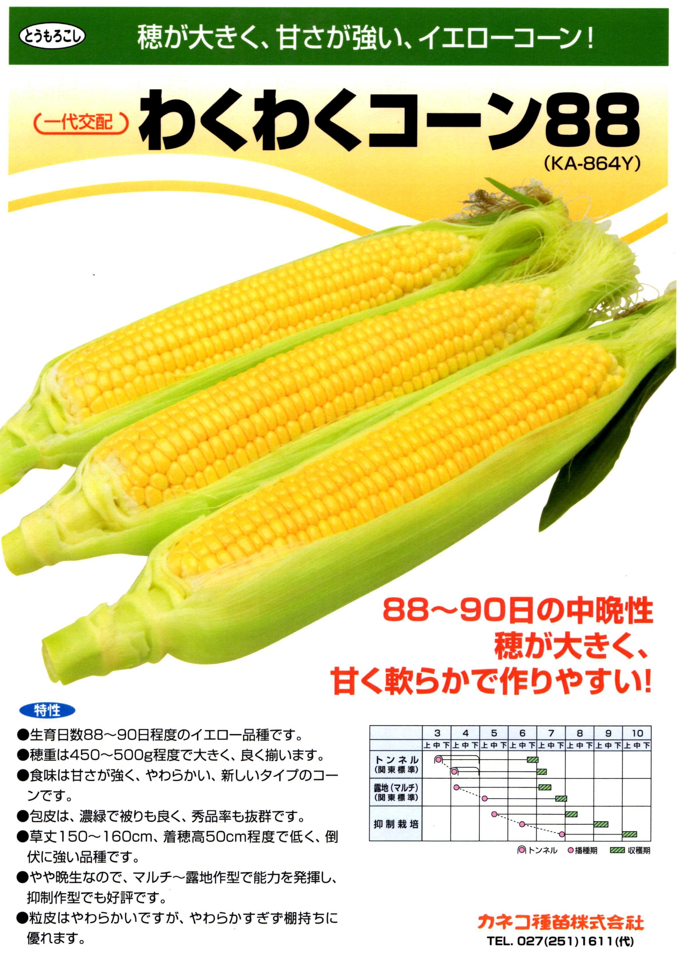 wakuwaku88-panf.jpg
