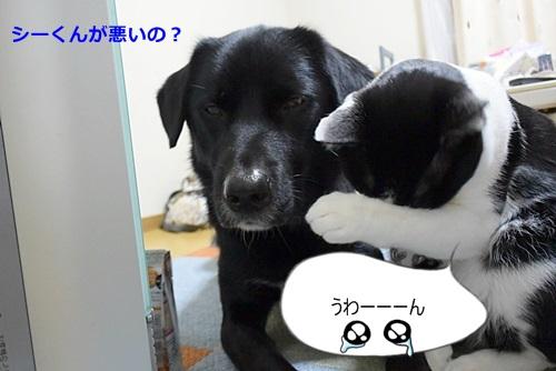 DSC_8749.jpg