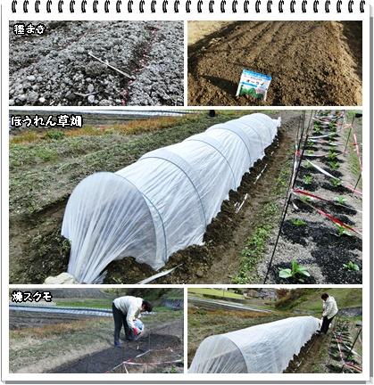 ほうれん草畑2