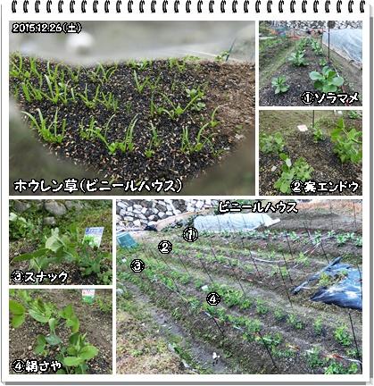 畑(豆類など)
