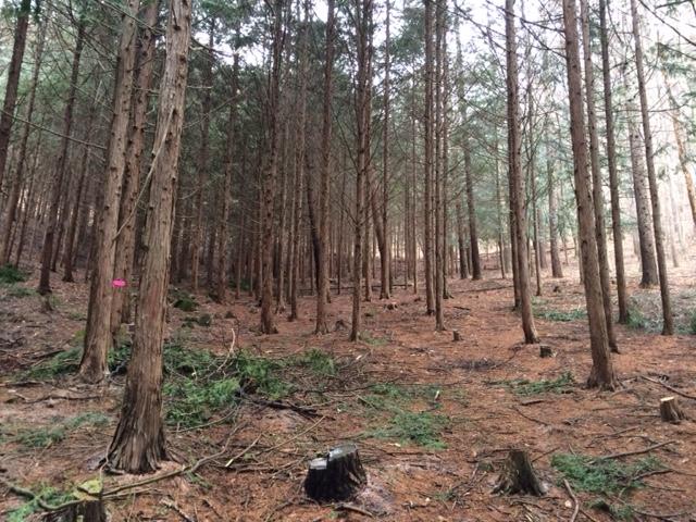 山林作業20160215