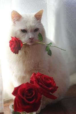薔薇としろくまくん2
