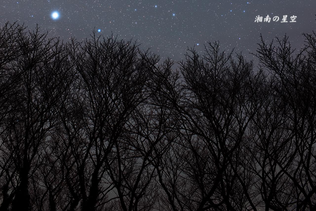 20160110_桜と冬の星座たち3