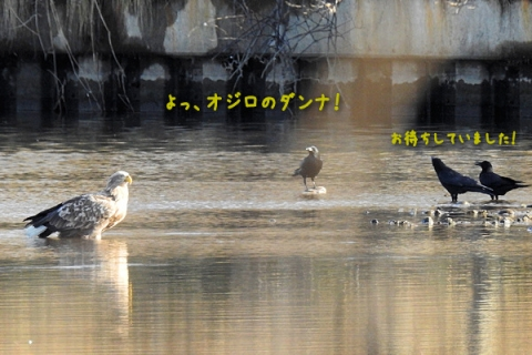 20151214ojiro1.jpg