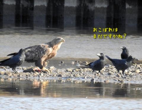 20151214ojiro3.jpg