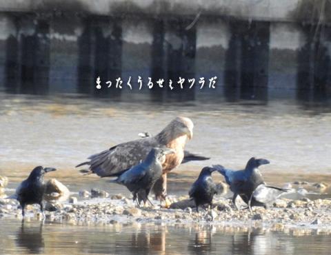 20151214ojiro4.jpg