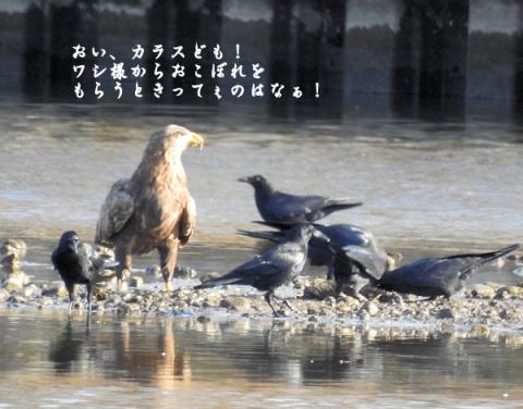 20151214ojiro5.jpg
