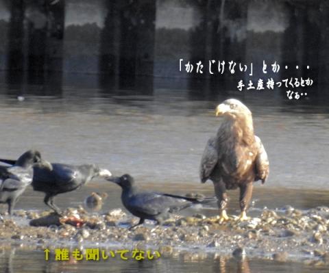 20151214ojiro6.jpg