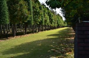 芝生の並木道