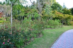 第一庭園のバラ