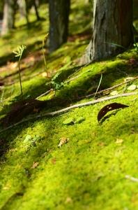 第二庭園に降りる傾斜地に生えた苔