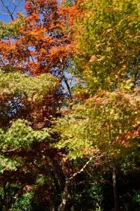 紅葉した木の周りを飛び回っていた蝶