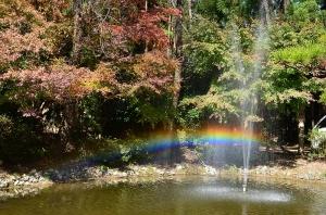 虹の見える噴水