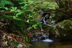 常清滝の下流の小川