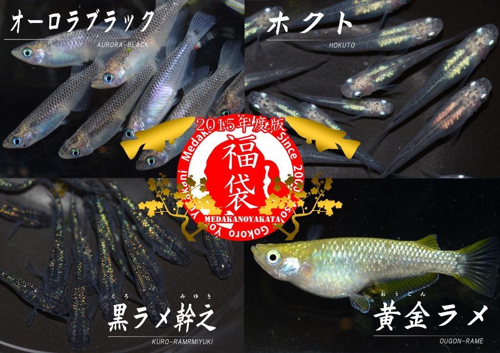 2016fuku-3.jpg