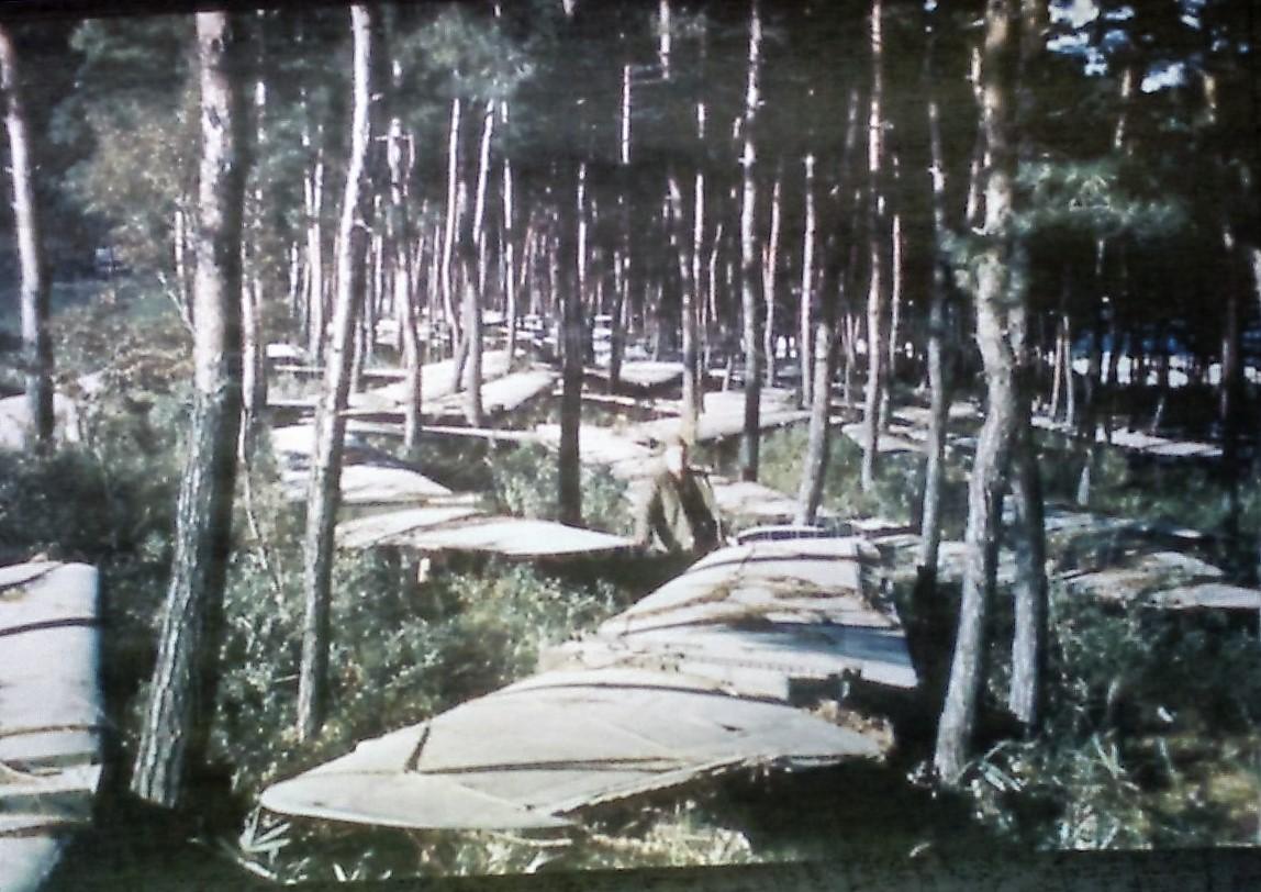 林の中の主翼