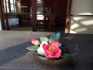 WEb椿の花