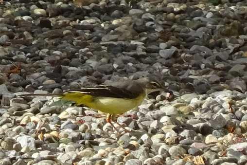 20151211 小鳥