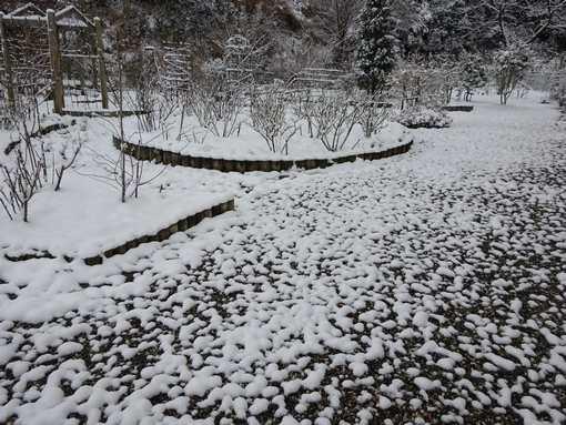 20160120 雪の朝②