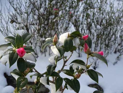 20160120 雪の朝④