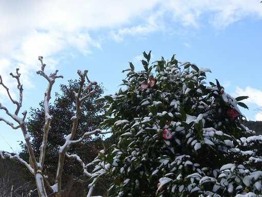20160120 雪の朝⑤