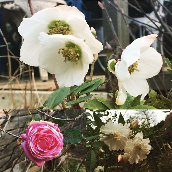 1,5庭の花