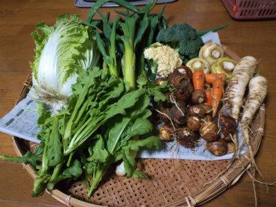 12.26収穫の野菜
