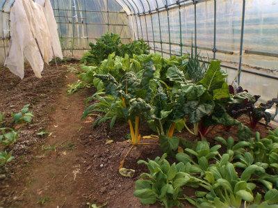 1.9ハウスの野菜