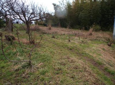 1.30冬枯れの畑