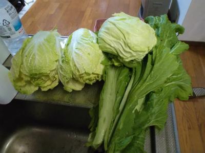 2.6収穫した野菜2