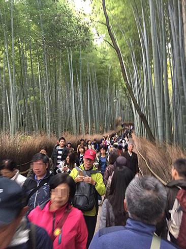 竹林の道_H27.11.24撮影