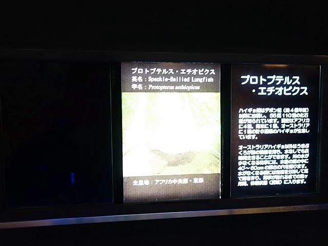 DSC04035-20151213.jpg