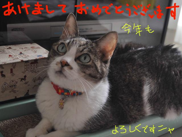 snap_tabiandtie_20151243431.jpg