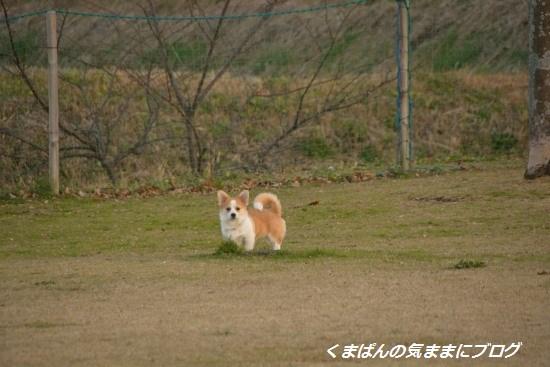 Nikon_20151219_162926.jpg