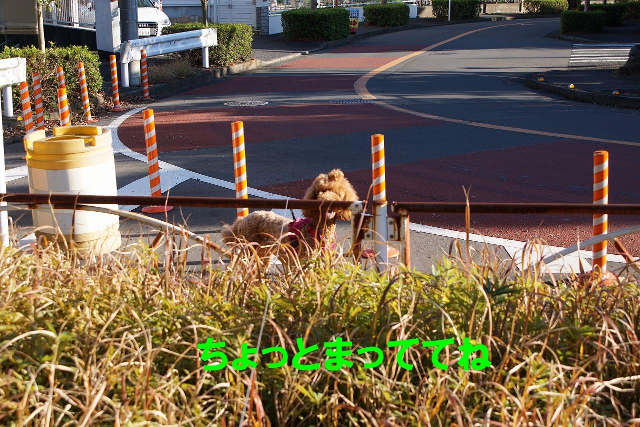 739b-DSC01235.jpg
