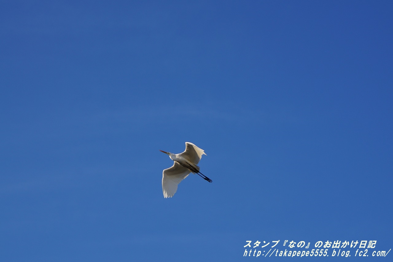 757b-DSC02630.jpg
