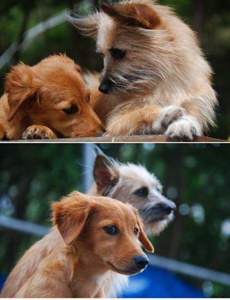愛犬サンシン 愛犬物語