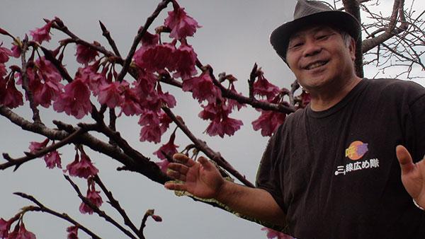 本部町桜祭り